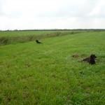 Ablegen der Hunde im Feld