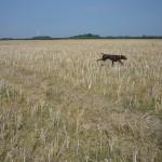 Tina II, bei der Suche im Feld