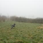 Hund zur Suche geschnallt