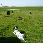Wesenstest, Ablegen der Hunde