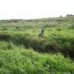 Bruno bei der Suche in einer Grünbrache