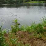 Bruno beim Bringen der Ente aus dem Wasser