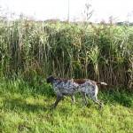 Hund markiert Richtungsweisend