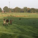 Suche im Feld