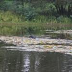 Verlorensuche im Wasser