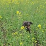 Hund bei der Suche