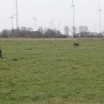 Hund bei der Feldsuche